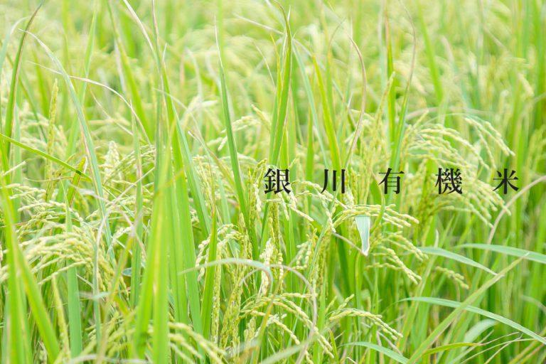 特選台灣在地銀川糯米